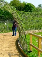 Living Willow Tunnel 20m long