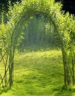 childrens-living-willow-tunnel