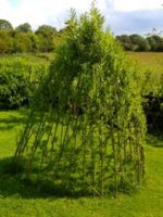 living-willow-dome-1