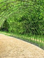 living-willow-tunnel-3