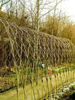 living-willow-tunnel-4